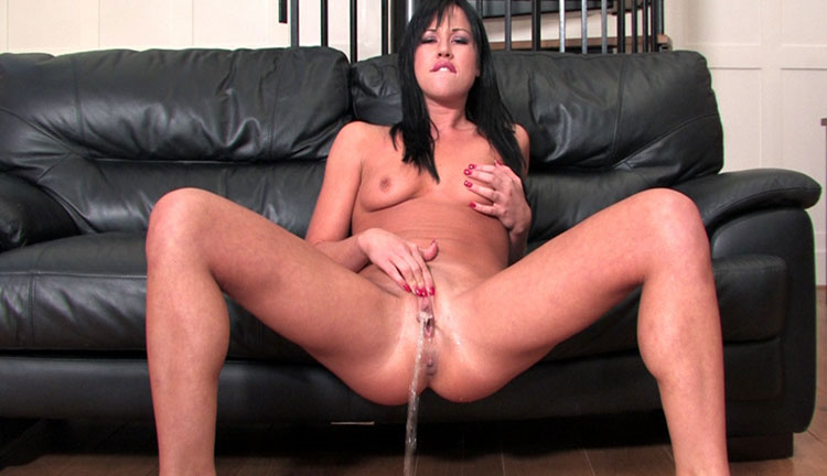 Cocker spaniel grooming anal area